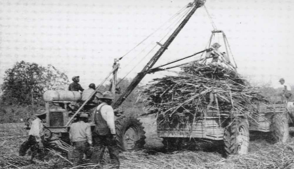 Early Cane Harvesting