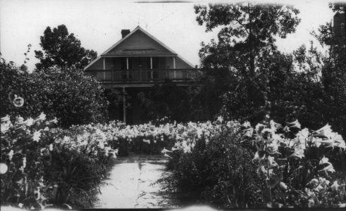 Alice Plantation - Image