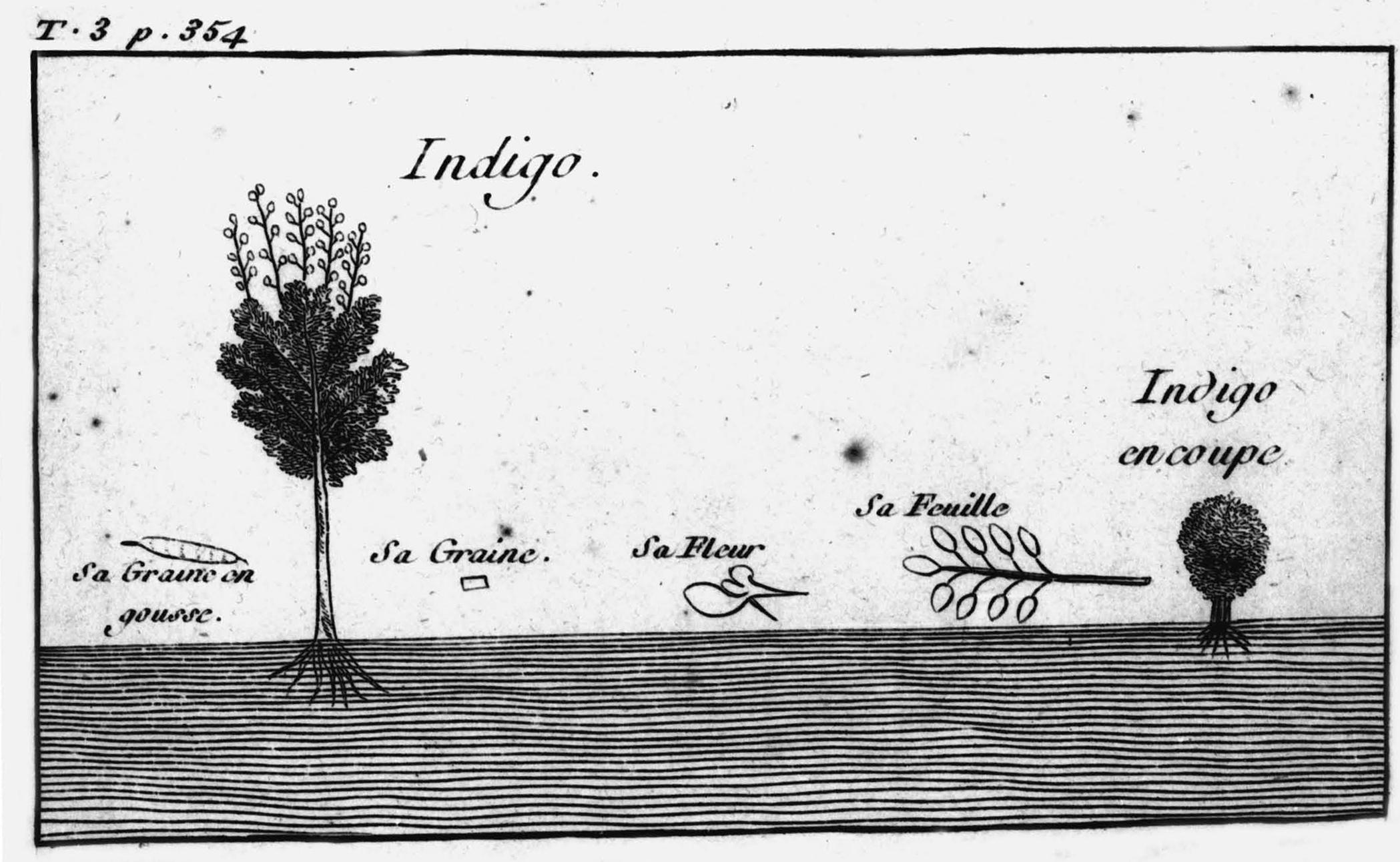 Indigo Plant.