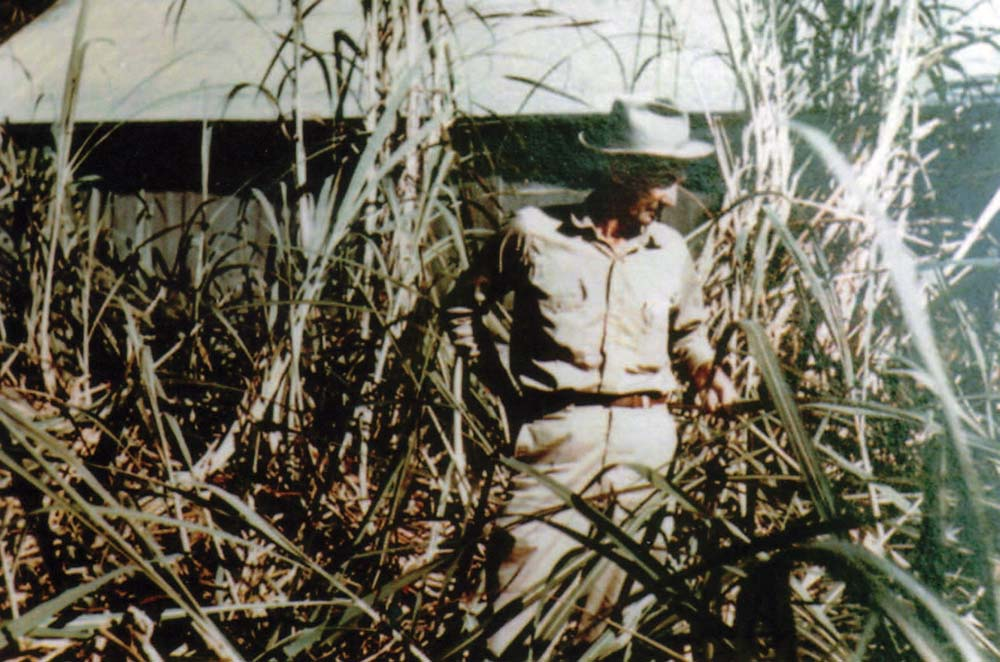 Sugar Cane Inspection